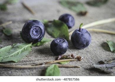Wild blueberries on wooden plank among the leaves and needles of a pine tree. It can be used for food and cooking magazines; healthy lifestyle books; for interior and print design.