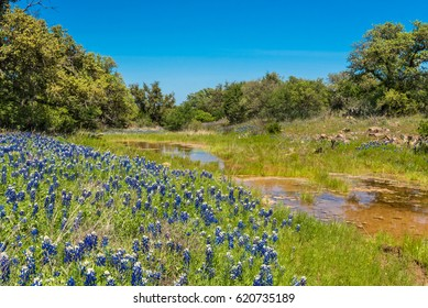 Wild bluebonnets on the hill side next to creek along Texas road
