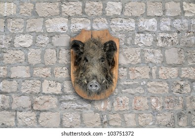 wild boar head on stone wall