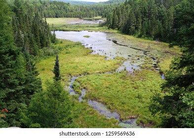 wild boreal forest in Canada