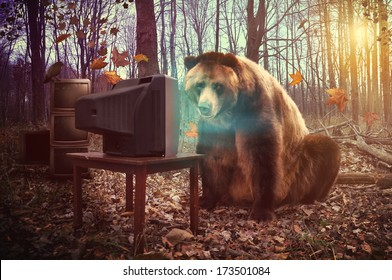 A wild brown bear is watching television in the woods with a crow on broken tv's for an entertainment, humor or surreal concept.