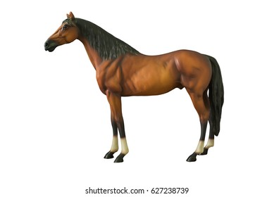 Wild brown horse standing isolated on white background.