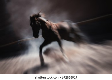 Wild brown stallion horse running and rearing inside a paddock. Artistic low key, blurred, long exposure image.