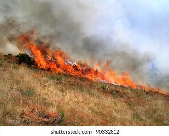 Wild bush vegetation in fire