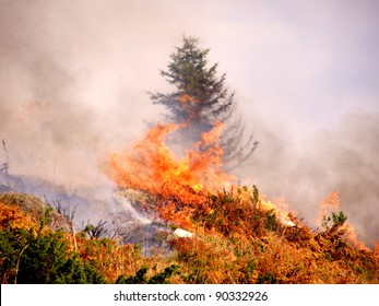 Wild bush vegetation in fire
