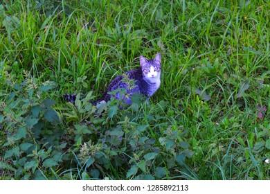 A wild cat