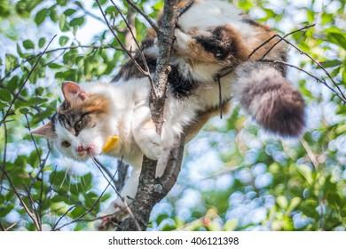 Wild cat climbs on the tree.