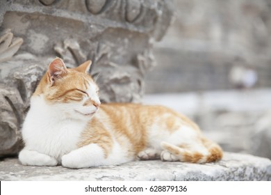 Wild cat at Ephesus Ancient City in Turkey