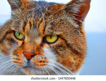 Wild Cat eyes and hunting Animal cute boss portrait