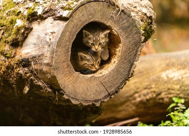 wild cat in the forest