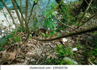 wild cat in the forest among the trees by the river