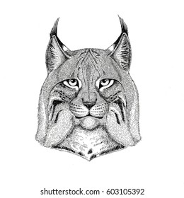 Wild cat Lynx Bobcat Trot Hand drawn illustration for tattoo, emblem, badge, logo, patch Isolated on white background