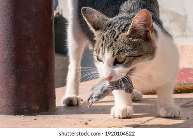 wild cat with mouse in mouth