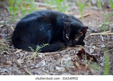 Wild cat resting in a public park