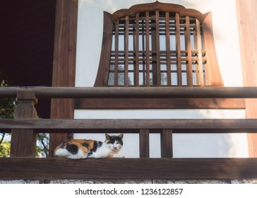 A wild cat is taking a nat in a temple in Japan.