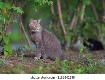 Wild Cat in Yamagata Nature area.
