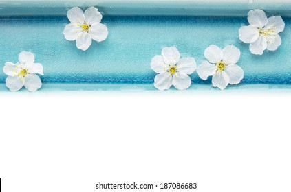 Wild cherry flowers in blue bowl with water, spa, isolated on white backgound