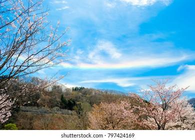 Wild cherry trees and level rainbow