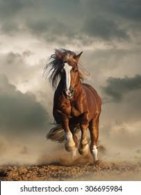 Wild chestnut draft horse running gallop under the cloudy skies