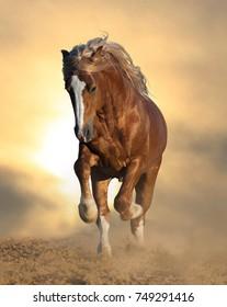 Wild chestnut stallion running front view