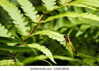 Wild colorful dragon fly in nature