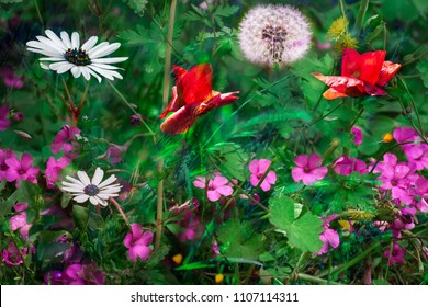 wild and colorful field flowers