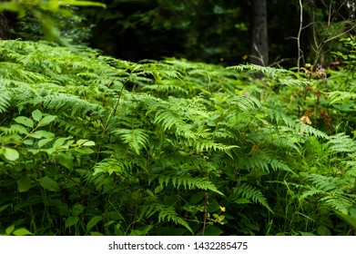 In the wild coniferous forest, the national natural park
