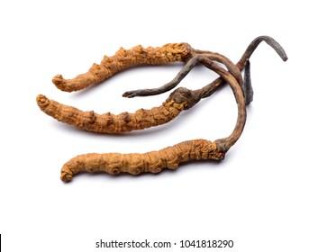 Wild cordyceps sinensis Tibet whole pieces. Isolated on white background.