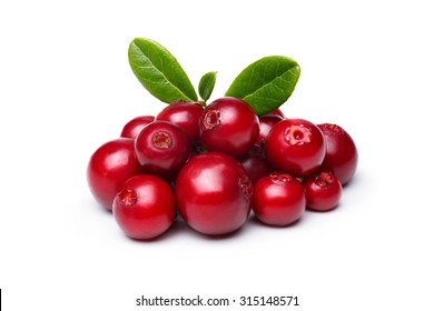 Wild Cowberry (foxberry,lingonberry) with leaves isolated on white. Infinite depth of field