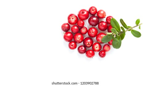 Wild cowberry isolated on white background. Ripe red forest berries Vaccinium vitis-idaea with green leaves. Copy space.