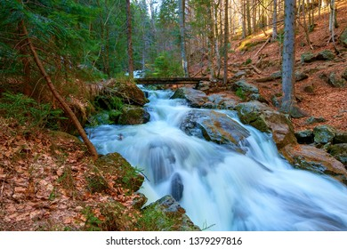 a wild creek in the bavarian forest