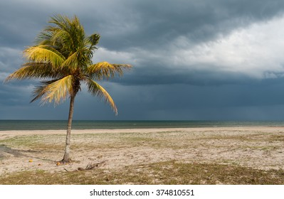 wild cuban beach with palm tree