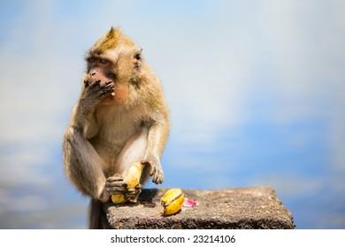 Wild cute little monkey eating banana