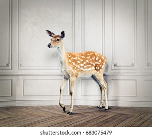 the wild deer in the luxury design room. photo combination concept