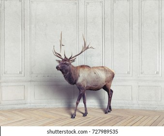 the wild deer in the luxury design room.  photo combination  illustration