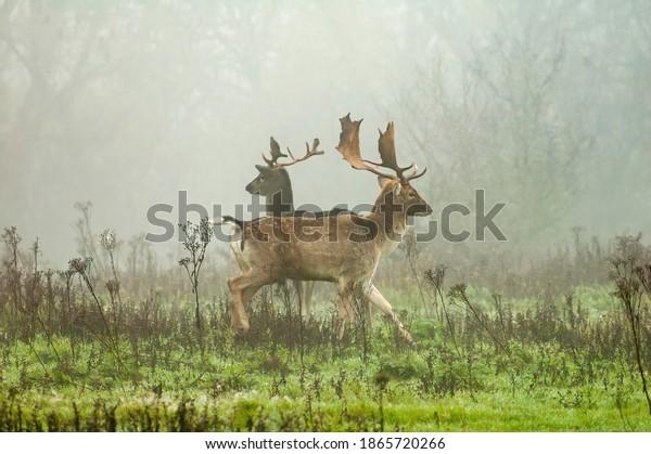 wild-deer-morning-mist-600w-1865720266.j