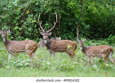 wild Deers welcoming Tourists