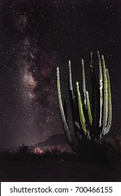 In the wild desert of Baja California stand some of the tallest cacti in the world but at night, even these giants are dwarfed by the great expanse of our home galaxy, the Milky Way. Noisy image