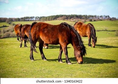 Wild Devon horse in the countryside