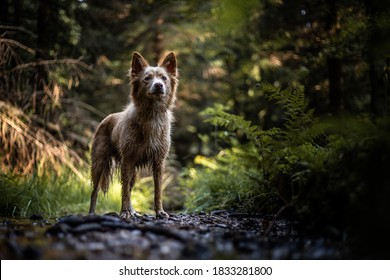 wild dog guarded path in forrest