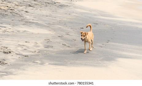 Wild dog at Indian beach