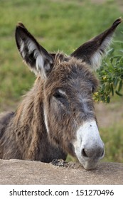 wild donkey in Fuerteventura