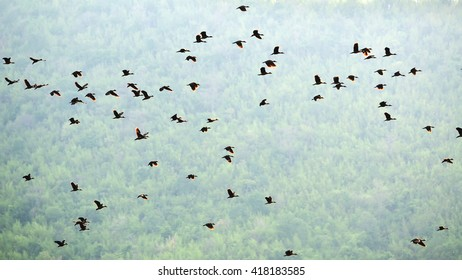 wild ducks flying landscape, at sunset in mountains
