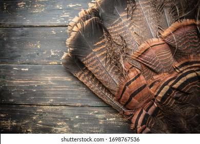 A wild eastern turkey fan feathers on wood background.