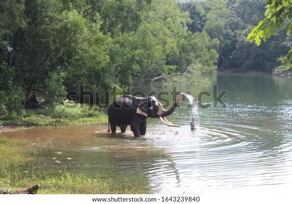 wild-elephant-bathing-river-having-600w-