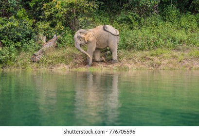 Wild elephants along the river