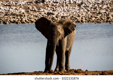 Wild elephants in Namibia South Africa