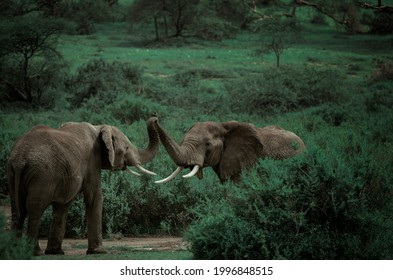 wild elephants stang in the forest.
