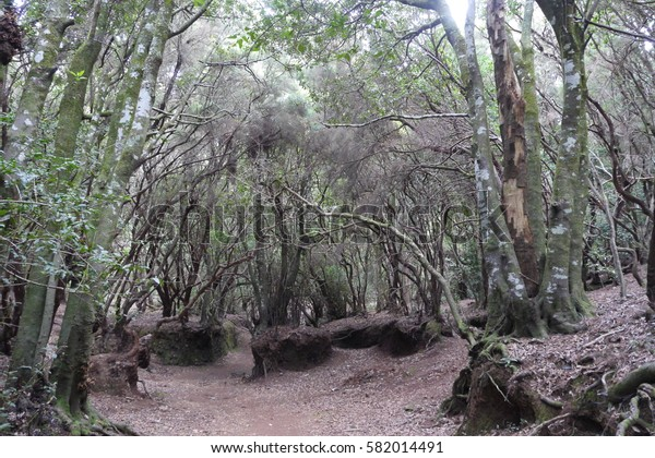 Wild fairy forest with and trail on the island of El Hierro.