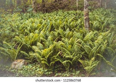 Wild fern field
